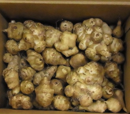 画像1: 菊芋 「唐芋」 種2 kg (1)